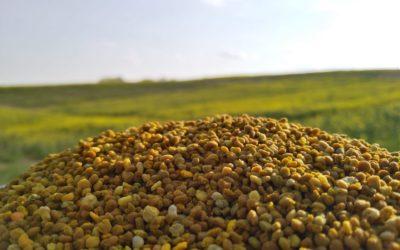 Concours 2020 Beelgium, pour favoriser un partenariat apiculteur/agriculteur gagnant !  (Boninne) – Candidat